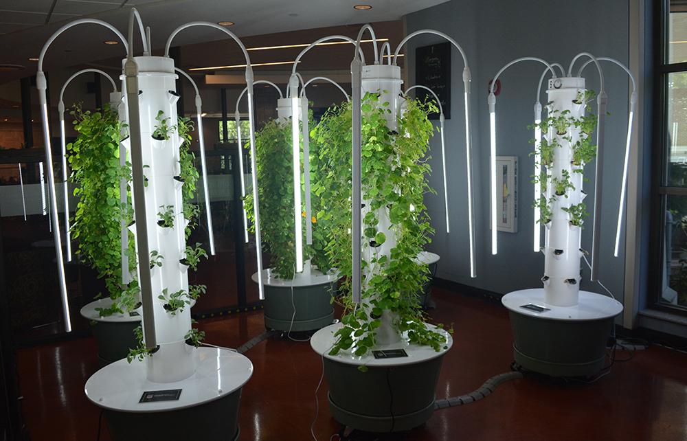Vertical Aeroponic Gardens Debut at Oglethorpe Dining Commons